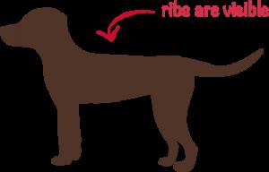 underweight-dog